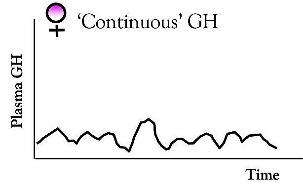 Female continuous GH release pattern